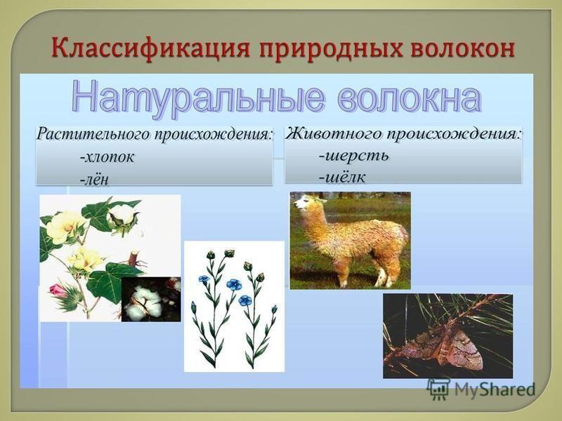 Естественные красители в свою очередь делятся на красители растительного и животного происхождения.