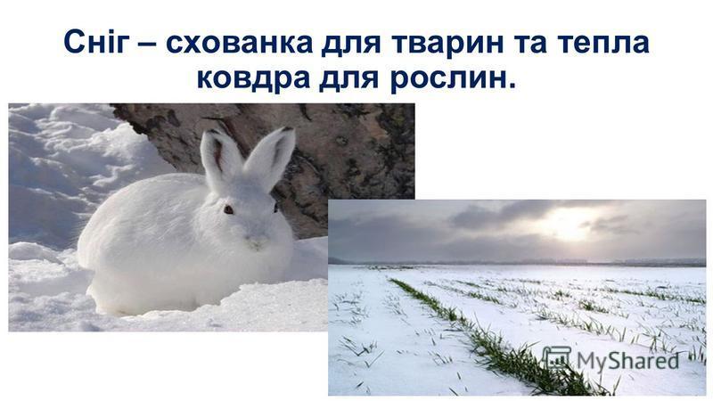 Сніг – схованка для тварин та тепла ковдра для рослин.