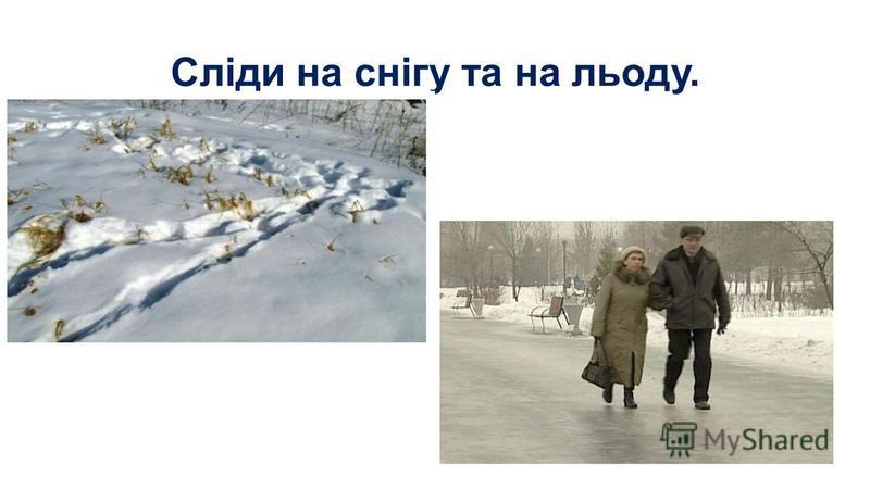 Сліди на снігу та на льоду.
