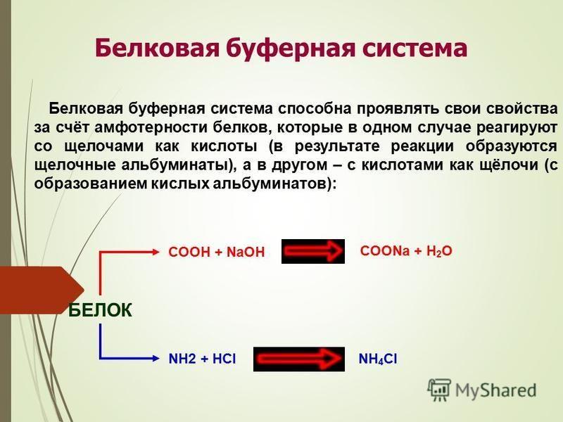 Белковая буферная система Белковая буферная система способна проявлять свои свойства за счёт амфотерности белков, которые в одном случае реагируют со щелочами как кислоты (в результате реакции образуются щелочные альбуминаты), а в другом – с кислотам