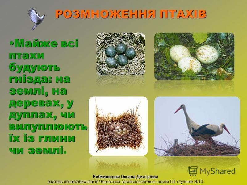 Майже всі птахи будують гнізда: на землі, на деревах, у дуплах, чи вилуплюють їх із глини чи земліМайже всі птахи будують гнізда: на землі, на деревах, у дуплах, чи вилуплюють їх із глини чи землі. РОЗМНОЖЕННЯ ПТАХІВ Рибчинецька Оксана Дмитрівна вчит