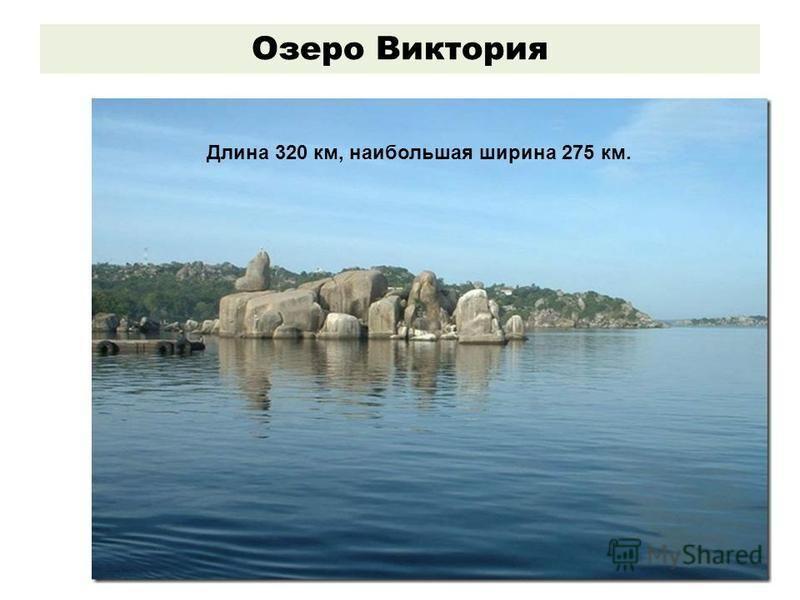 Озеро Виктория Длина 320 км, наибольшая ширина 275 км.