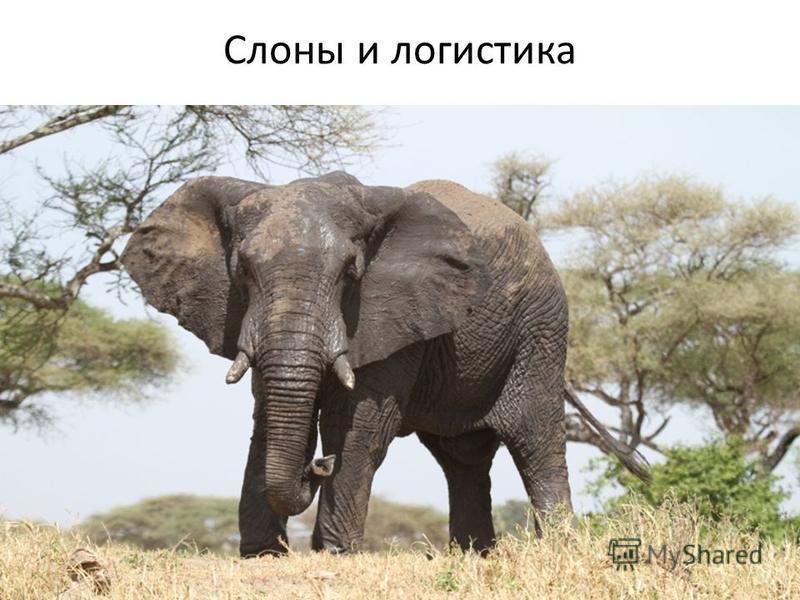 Слоны и логистика