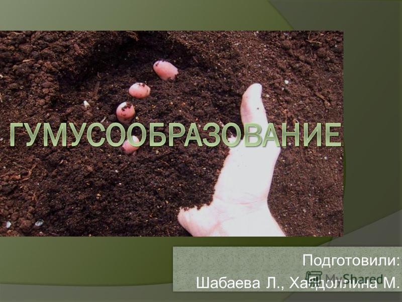 Подготовили: Шабаева Л., Хабдоллина М. Подготовили: Шабаева Л., Хабдоллина М.