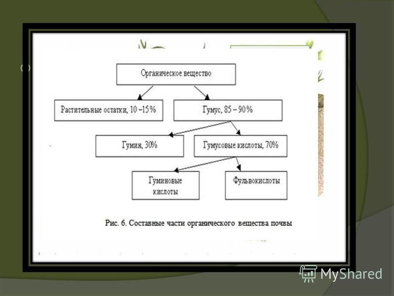 Гу́муз (лат. humus «земля, почва») основное органическое вещество почвы, содержащее питательные вещества, необходимые высшим растениям. Гумуз составляет 8590 % органического вещества почвы и является важным критерием при оценке её плодородности.