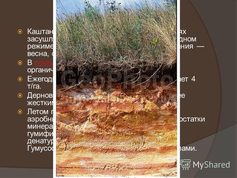 Каштановые почвы образовались в условиях засушливого климата при непромывном водном режиме. Периоды активного почвообразования весна, осень, иногда раннее лето.почвы В почвы сухих степей поступает меньше органического вещества, чем в черноземы.почвы