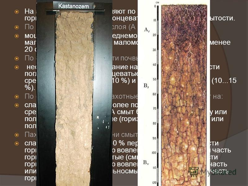 На виды почвы подразделяют по мощности гумусового горизонта, по степени солонцеватости и по степени смытости. По мощности гумусового слоя (А + В1) выделяют: мощные (более 50 см), среднемощные (30...50 см), маломощные (20...30 см), маломощные укорочен