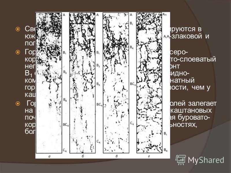 Светло-каштановые почвы (рис., в) формируются в южной подзоне сухих степей под полынно-злаковой и полынной растительностью. Горизонт А почв (около 15 см) светловато-серо- коричневый, бесструктурный или чешуйчато-слоеватый непрочной структуры, рыхлый,