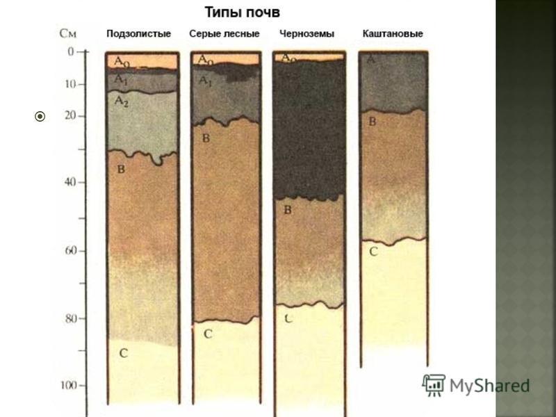 Серо-бурые почвы являются зональным типом почв суббореальных и субтропических пустынь. Они занимают в пределах СНГ обширные равнины Средней Азии и Казахстана.