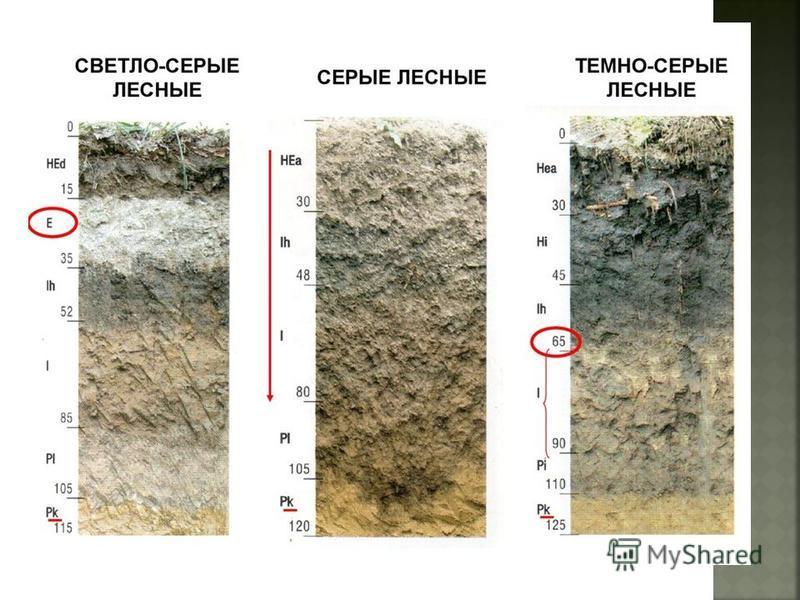 Наиболее четко дифференциация профиля на горизонты выражена у солонцеватых серо- бурых почв. Часто нижняя часть профиля сильно обогащена скоплениями гипса. Тип серо-бурых почв разделяется на три фациальных подтипа: серо-бурые пустынные очень теплые п
