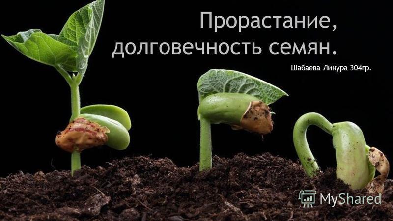 Прорастание, долговечность семян. Шабаева Линура 304 гр.