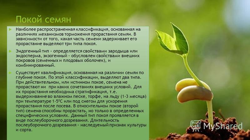 Покой семян Наиболее распространенная классификация, основанная на различиях механизмов торможения прорастания семян. В зависимости от того, какая часть семени задерживает его прорастание выделяют три типа покоя. Эндогенный тип – определяется свойств