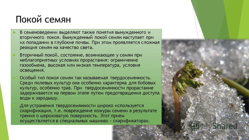 Покой семян В семеноведении выделяют также понятия вынужденного и вторичного покоя. Вынужденный покой семян наступает при их попадании в глубокие почвы. При этом проявляется сложная реакция семян на качество света. Вторичный покой, состояние, возника