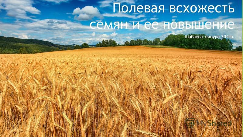 Полевая всхожесть семян и ее повышение Шабаева Линура 304 гр.