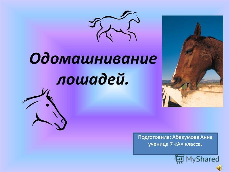 Одомашнивание лошадей. Подготовила: Абакумова Анна ученица 7 «А» класса.