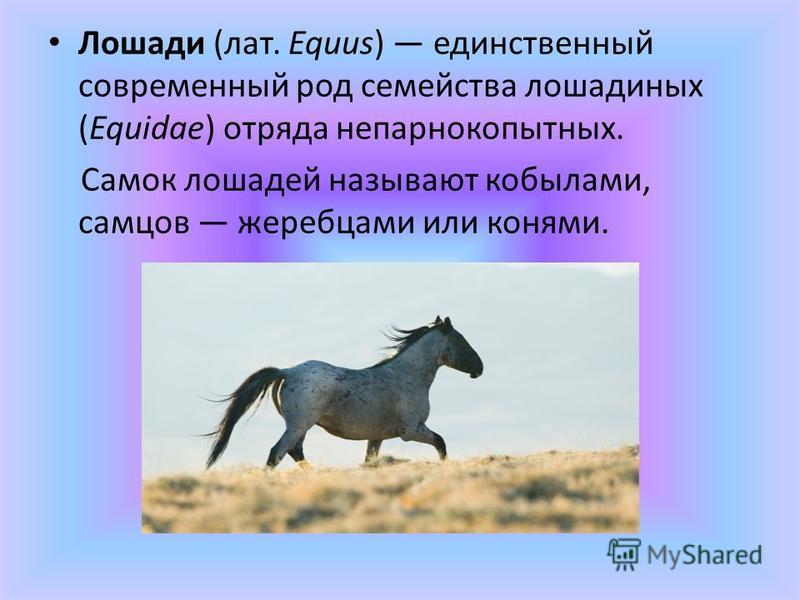 Лошади (лат. Equus) единственный современный род семейства лошадиных (Equidae) отряда непарнокопытных. Самок лошадей называют кобылами, самцов жеребцами или конями.