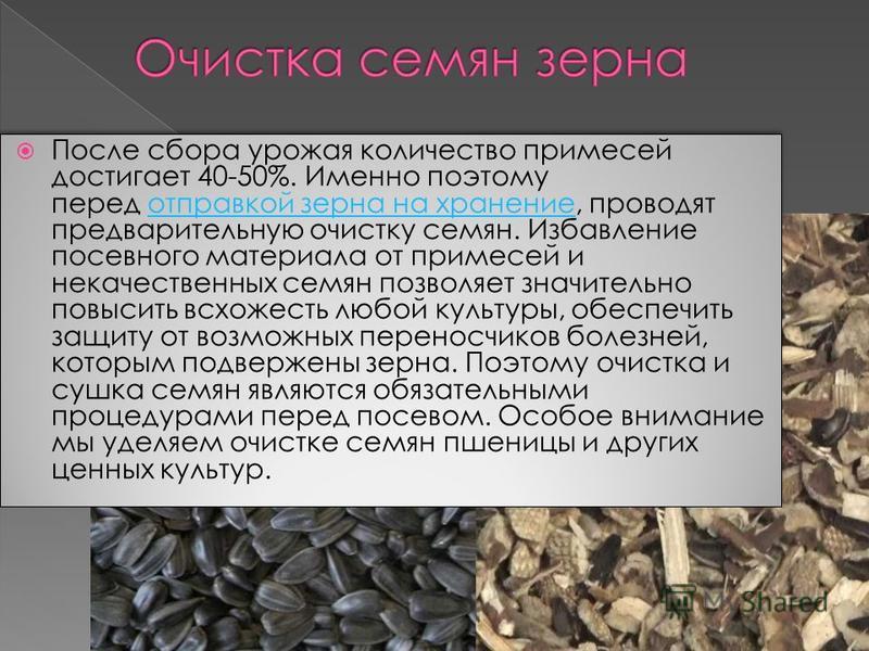 После сбора урожая количество примесей достигает 40-50%. Именно поэтому перед отправкой зерна на хранение, проводят предварительную очистку семян. Избавление посевного материала от примесей и некачественных семян позволяет значительно повысить всхоже