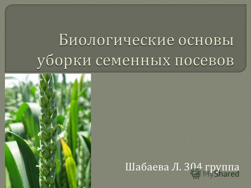 Шабаева Л. 304 группа