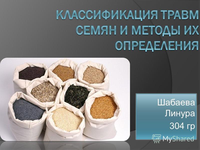 Шабаева Линура 304 гр