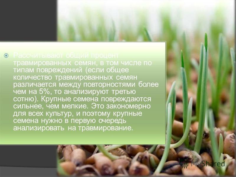 Рассчитывают общий процент травмированных семян, в том числе по типам повреждений (если общее количество травмированных семян различается между поверхностями более чем на 5%, то анализируют третью сотню). Крупные семена повреждаются сильнее, чем мелк