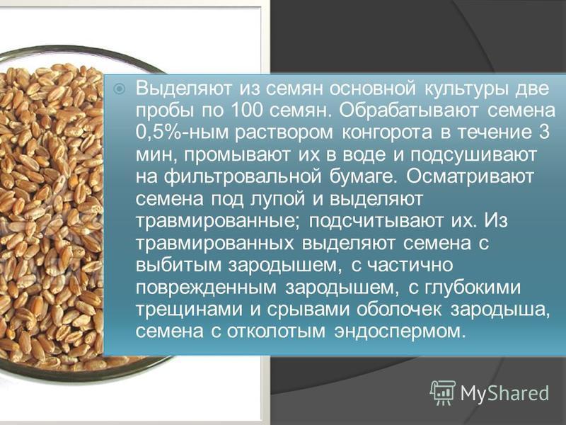 Выделяют из семян основной культуры две пробы по 100 семян. Обрабатывают семена 0,5%-ным раствором конго рота в течение 3 мин, промывают их в воде и подсушивают на фильтровальной бумаге. Осматривают семена под лупой и выделяют травмированные; подсчит