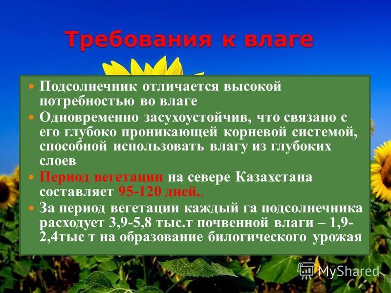 Требования к влаге Подсолнечник отличается высокой потребностью во влаге Одновременно засухоустойчив, что связано с его глубоко проникающей корневой системой, способной использовать влагу из глубоких слоев Период вегетации на севере Казахстана состав