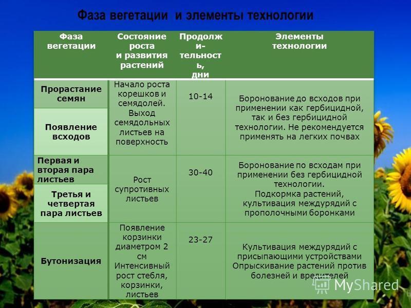 Фаза вегетации и элементы технологии