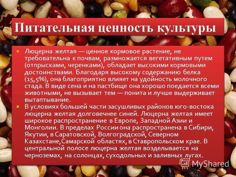 Люцерна желтая ценное кормовое растение, не требовательна к почвам, размножается вегетативным путем (отпрысками, черенками), обладает высокими кормовыми достоинствами. Благодаря высокому содержанию белка (15,5%), она благоприятно влияет на удойность