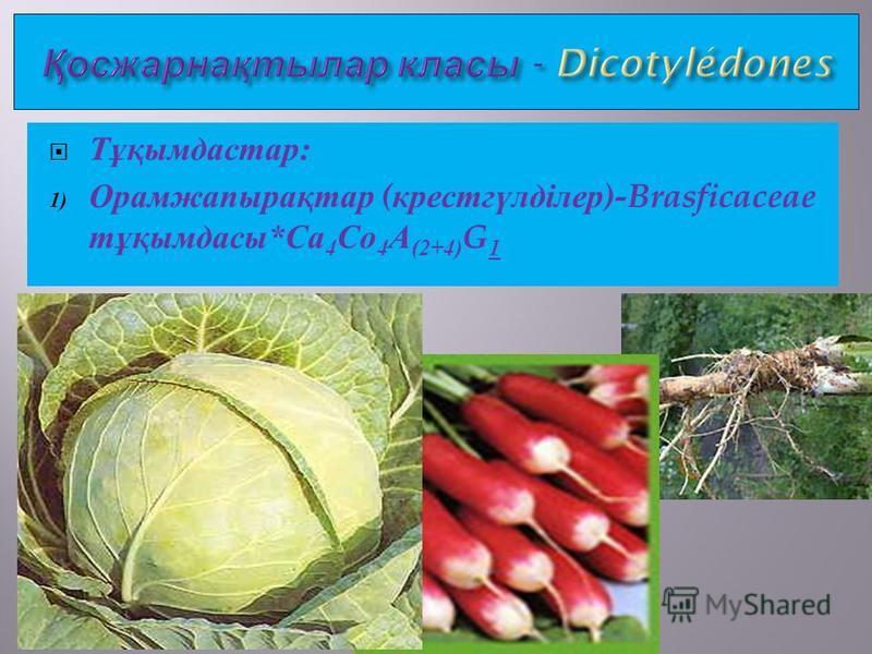 Тұқимдастар : 1) Орамжапырақтар ( крестгүлділер )-Brasficaceae тұқимдасы * Са 4 Со 4 А (2+4) G 1