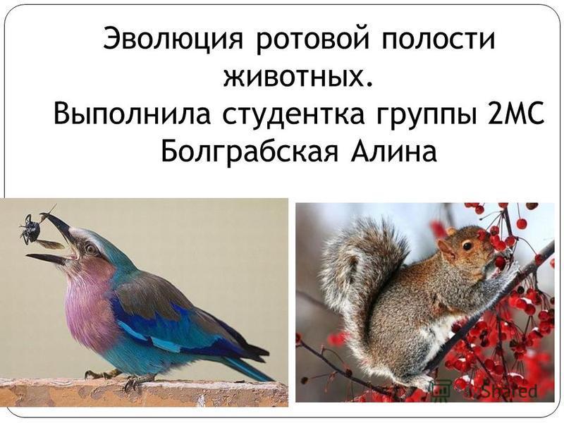 Эволюция ротовой полости животных. Выполнила студентка группы 2МС Болграбская Алина