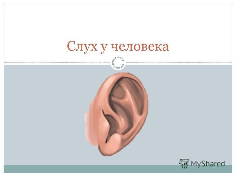 Слух у человека