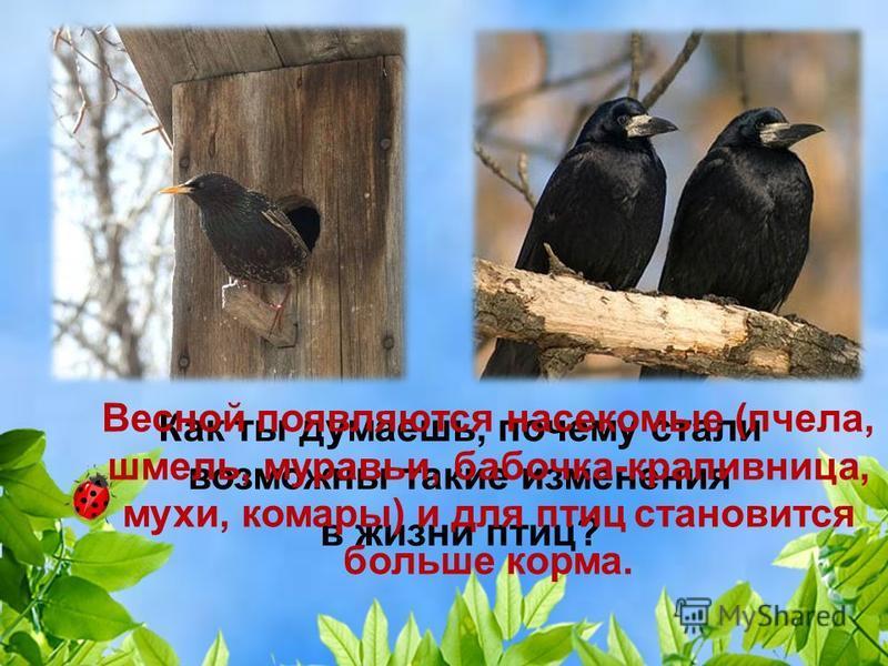 Как меняется жизнь птиц с приходом весны? С приходом весны возвращаются в родные края перелётные птицы. Они строят или ремонтируют гнёзда, откладывают яйца и выводят птенцов.
