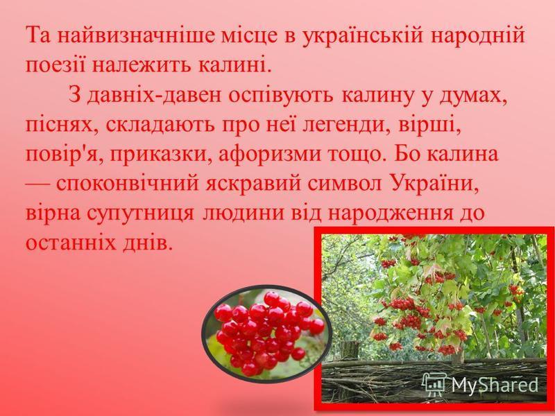 Та найвизначніше місце в українській народній поезії належить калині. З давніх-давен оспівують калину у думах, піснях, складають про неї легенди, вірші, повір'я, приказки, афоризми тощо. Бо калина споконвічний яскравий символ України, вірна супутниця