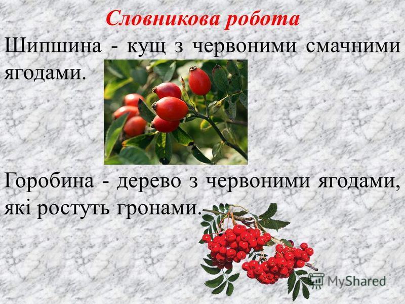 Словникова робота Шипшина - кущ з червоними смачними ягодами. Горобина - дерево з червоними ягодами, які ростуть гронами.