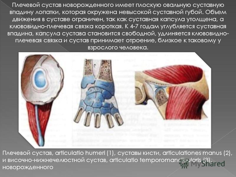 Плечевой сустав новорожденного имеет плоскую овальную суставную впадину лопатки, которая окружена невысокой суставной губой. Объем движения в суставе ограничен, так как суставная капсула утолщена, а клювовидно-плечевая связка короткая. К 4-7 годам уг