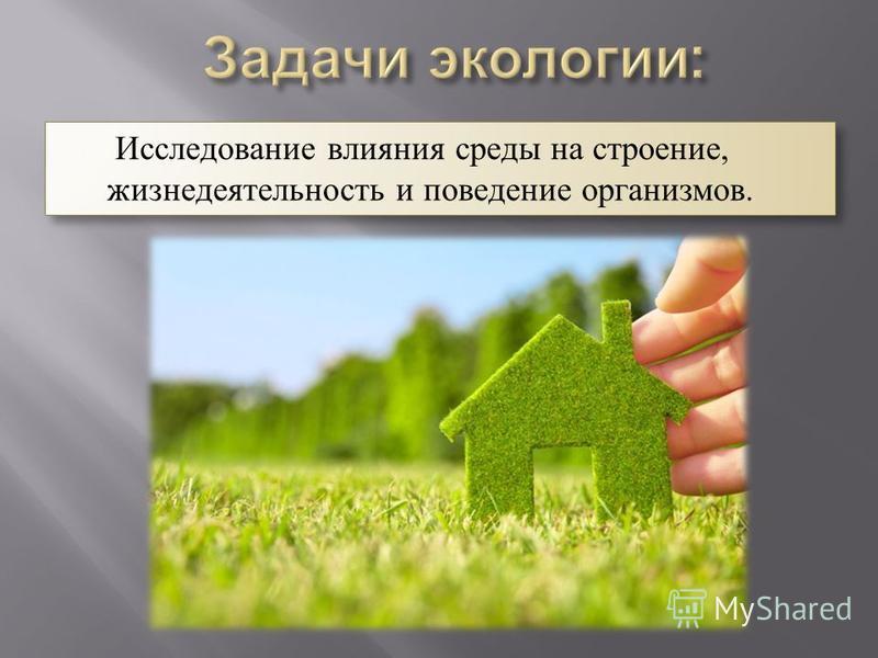 Исследование влияния среды на строение, жизнедеятельность и поведение организмов.