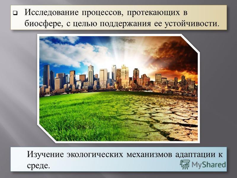 Изучение экологических механизмов адаптации к среде. Исследование процессов, протекающих в биосфере, с целью поддержания ее устойчивости.