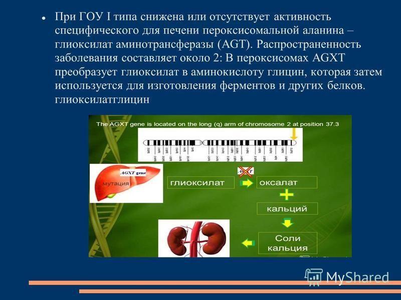 При ГОУ I типа снижена или отсутствует активность специфического для печени пероксисомальной аланина – глиоксилат аминотрансферазы (AGT). Распространенность заболевания составляет около 2: В пероксисомах AGXT преобразует глиоксилат в аминокислоту гли