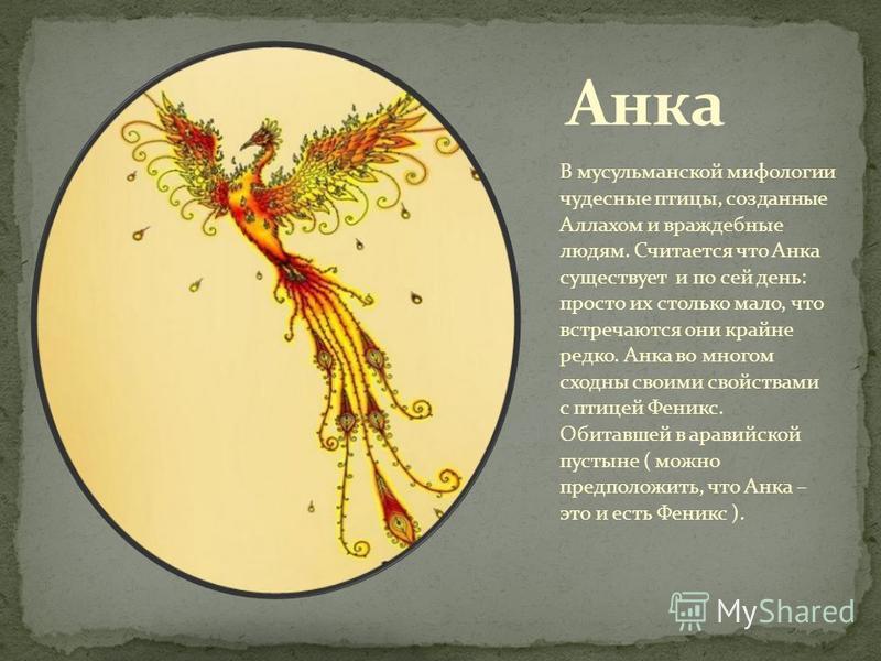 В мусульманской мифологии чудесные птицы, созданные Аллахом и враждебные людям. Считается что Анка существует и по сей день: просто их столько мало, что встречаются они крайне редко. Анка во многом сходны своими свойствами с птицей Феникс. Обитавшей