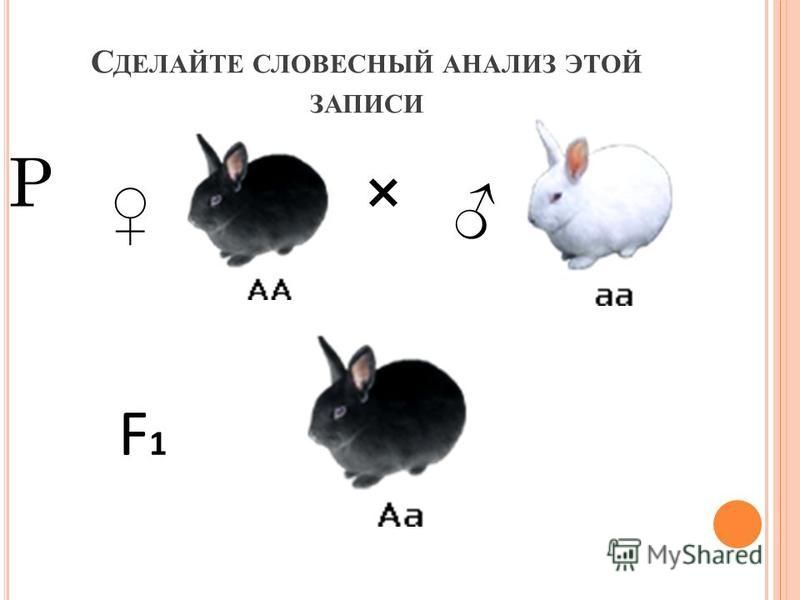 Р: Серый кролик Х белый кролик F1: серый кролик - 100% Р: желтый горох Х зеленый горох F1: желтый горох - 100%