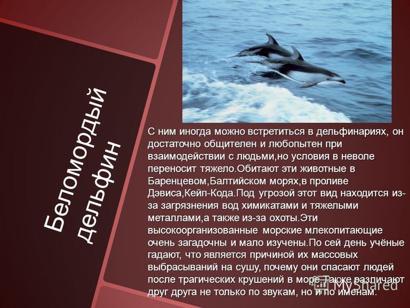 Беломордый дельфин С ним иногда можно встретиться в дельфинариях, он достаточно общителен и любопытен при взаимодействии с людьми,но условия в неволе переносит тяжело.Обитают эти животные в Баренцевом,Балтийском морях,в проливе Дэвиса,Кейп-Кода.Под у