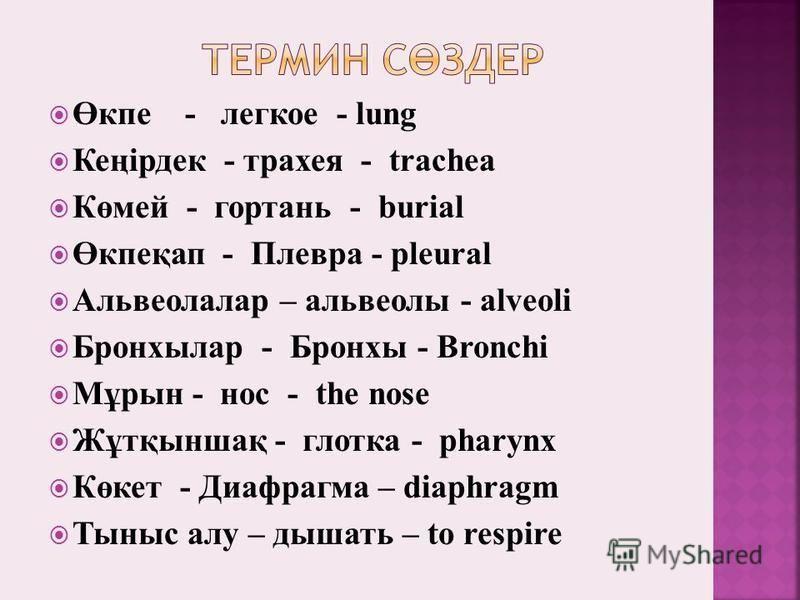 Өкпе - легкое - lung Кеңірдек - трахея - trachea Көмей - гортань - burial Өкпеқап - Плевра - pleural Альвеолалар – альвеолы - alveoli Бронхылар - Бронхы - Bronchi Мұрын - нос - the nose Жұтқыншақ - глотка - pharynx Көкет - Диафрагма – diaphragm Тыныс
