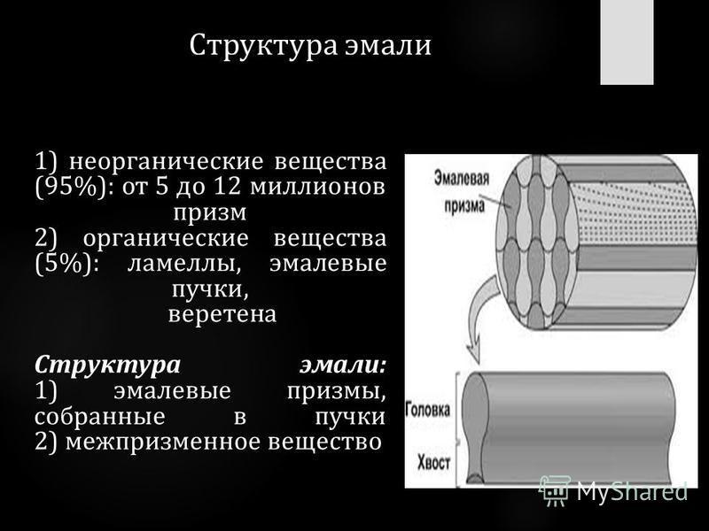 Структура эмали 1) неорганические вещества (95%): от 5 до 12 миллионов призм 2) органические вещества (5%): ламеллы, эмалевые пучки, веретена Структура эмали: 1) эмалевые призмы, собранные в пучки 2) межпризменное вещество