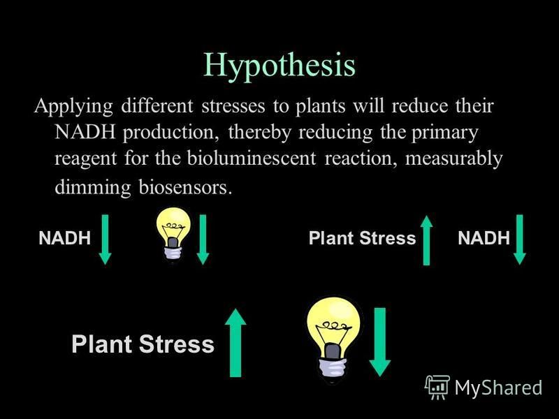 Hypothesis Applying different stresses to plants will reduce their NADH production, thereby reducing the primary reagent for the bioluminescent reaction, measurably dimming biosensors. NADHPlant StressNADH thus Plant Stress