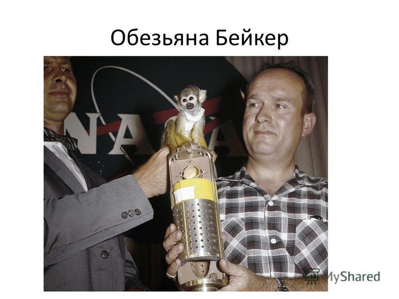 Обезьяна Бейкер