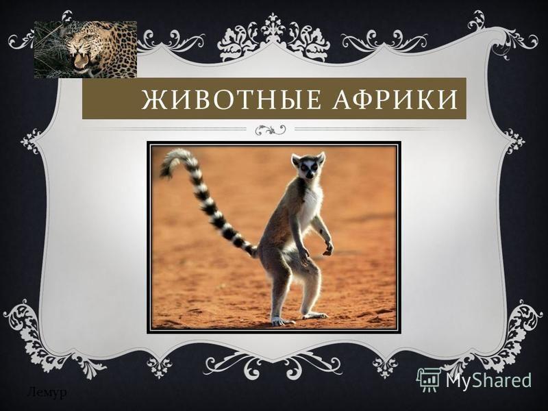 ЖИВОТНЫЕ АФРИКИ Лемур