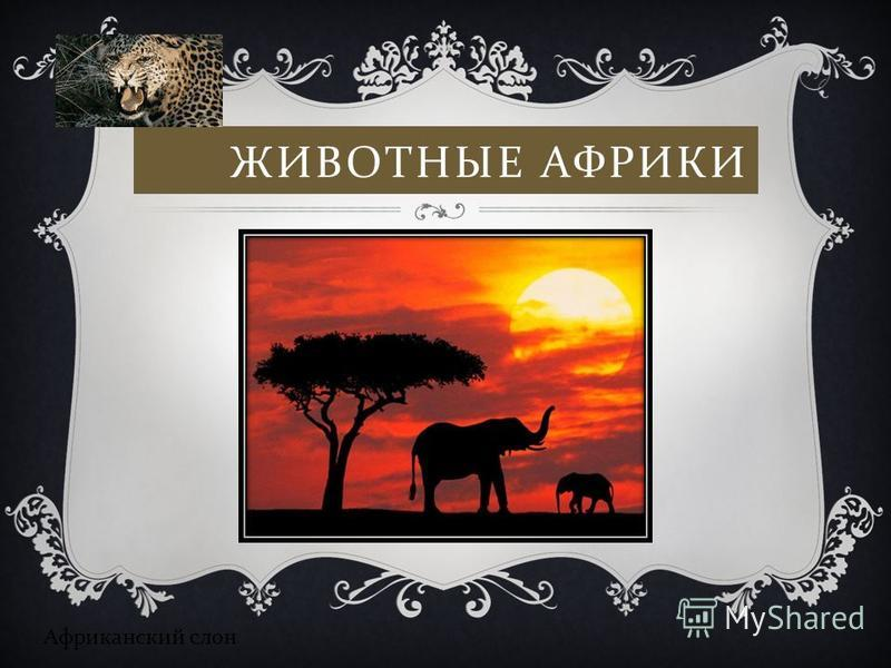 ЖИВОТНЫЕ АФРИКИ Африканский слон