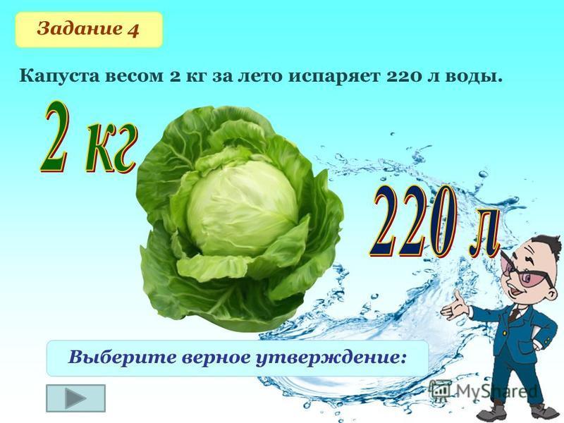 Задание 4 Капуста весом 2 кг за лето испаряет 220 л воды. Выберите верное утверждение: