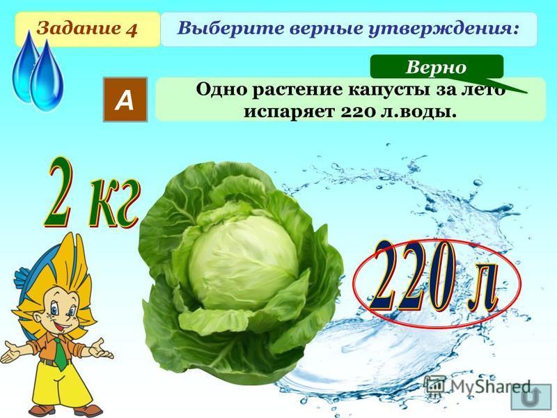Задание 4 Выберите верные утверждения: А Одно растение капусты за лето испаряет 220 л.воды. Верно