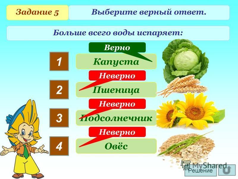 Задание 5 Выберите верный ответ. Больше всего воды испаряет: 1 2 3 4 Капуста Пшеница Подсолнечник Овёс Неверно Верно Решение